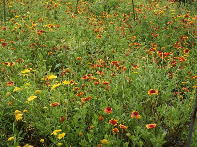花ギフト|フラワーギフト|誕生日 花|カノシェ話題|スタンド花|ウエディングブーケ|花束|花屋|P8150004