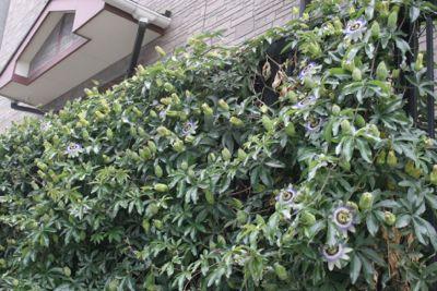 花ギフト|フラワーギフト|誕生日 花|カノシェ話題|スタンド花|ウエディングブーケ|花束|花屋|6938575c