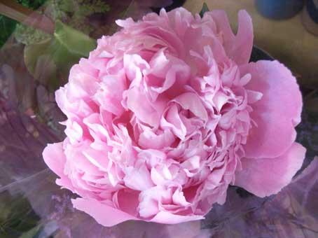 花ギフト|フラワーギフト|誕生日 花|カノシェ話題|スタンド花|ウエディングブーケ|花束|花屋|芍薬