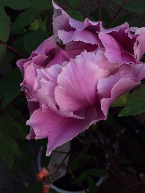 花ギフト|フラワーギフト|誕生日 花|カノシェ話題|スタンド花|ウエディングブーケ|花束|花屋|写真 2(32)