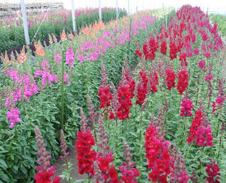 花ギフト|フラワーギフト|誕生日 花|カノシェ話題|スタンド花|ウエディングブーケ|花束|花屋|きんぎょ