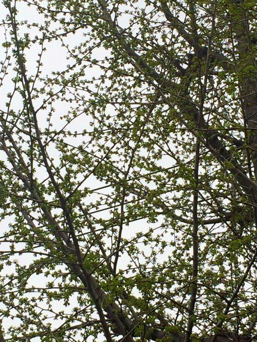 花ギフト|フラワーギフト|誕生日 花|カノシェ話題|スタンド花|ウエディングブーケ|花束|花屋|IMG_4302