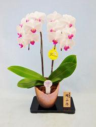 花ギフト|フラワーギフト|誕生日 花|カノシェ話題|スタンド花|ウエディングブーケ|花束|花屋|shin2