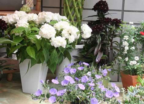 花ギフト|フラワーギフト|誕生日 花|カノシェ話題|スタンド花|ウエディングブーケ|花束|花屋|やまあじさい