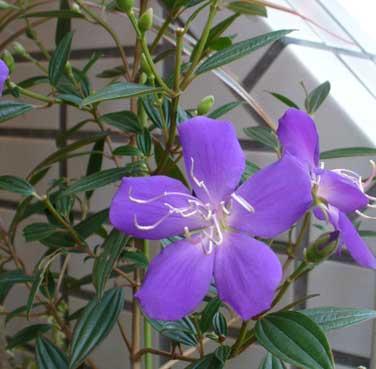 花ギフト|フラワーギフト|誕生日 花|カノシェ話題|スタンド花|ウエディングブーケ|花束|花屋|のぼたん2