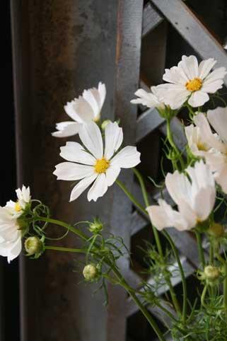 花ギフト|フラワーギフト|誕生日 花|カノシェ話題|スタンド花|ウエディングブーケ|花束|花屋|アフタヌーン
