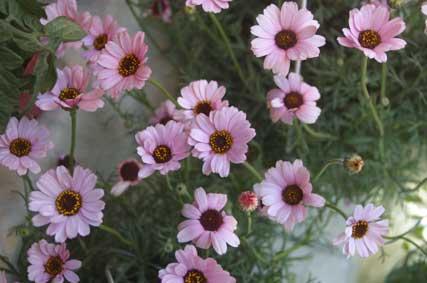 花ギフト フラワーギフト 誕生日 花 カノシェ話題 スタンド花 ウエディングブーケ 花束 花屋 マウイ