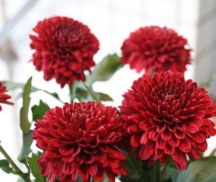 花ギフト|フラワーギフト|誕生日 花|カノシェ話題|スタンド花|ウエディングブーケ|花束|花屋|赤ピンポン