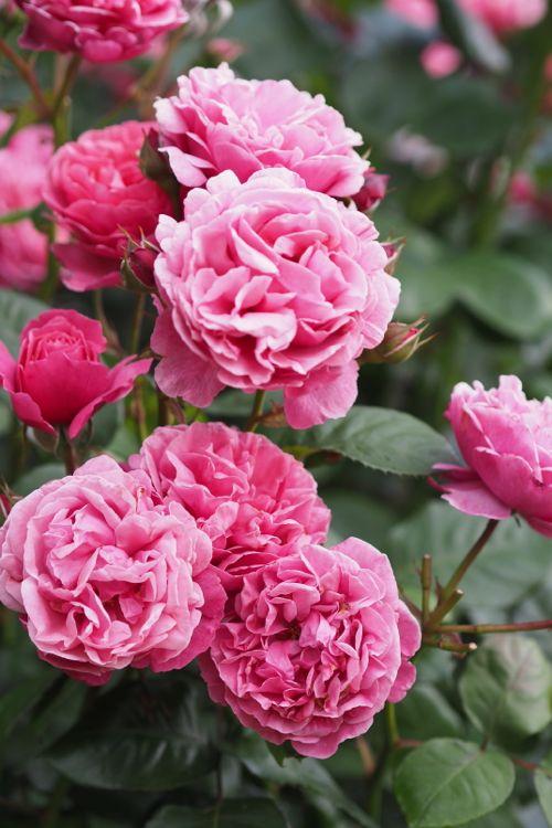 花ギフト|フラワーギフト|誕生日 花|カノシェ話題|スタンド花|ウエディングブーケ|花束|花屋|P6022736