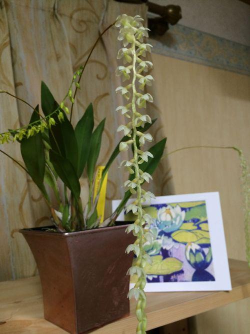 花ギフト|フラワーギフト|誕生日 花|カノシェ話題|スタンド花|ウエディングブーケ|花束|花屋|IMG_9677