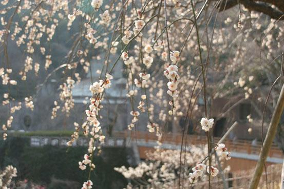 花ギフト|フラワーギフト|誕生日 花|カノシェ話題|スタンド花|ウエディングブーケ|花束|花屋|siro-ume