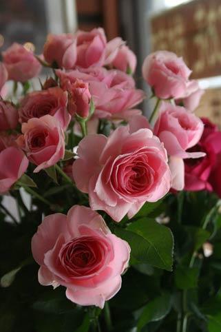 花ギフト|フラワーギフト|誕生日 花|カノシェ話題|スタンド花|ウエディングブーケ|花束|花屋|IMG_0953