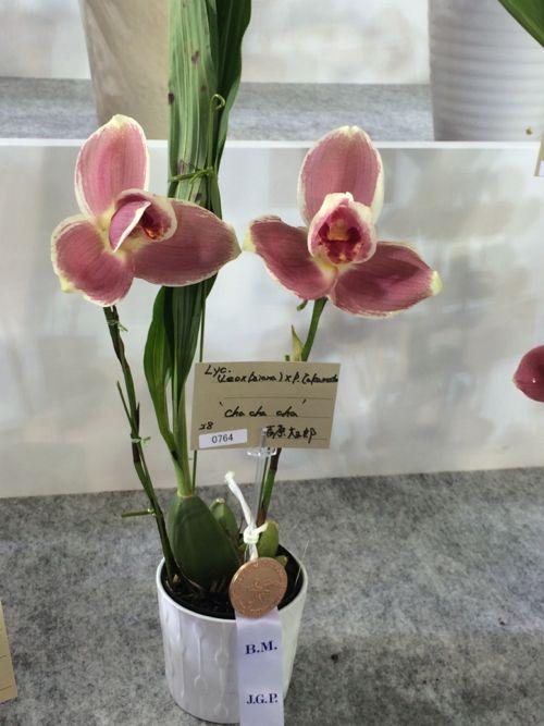 花ギフト|フラワーギフト|誕生日 花|カノシェ話題|スタンド花|ウエディングブーケ|花束|花屋|IMG_9443