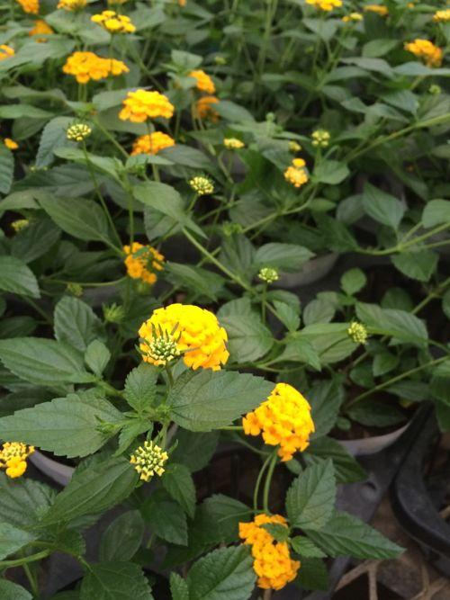 花ギフト|フラワーギフト|誕生日 花|カノシェ話題|スタンド花|ウエディングブーケ|花束|花屋|IMG_6607