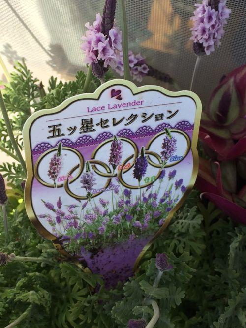 花ギフト|フラワーギフト|誕生日 花|カノシェ話題|スタンド花|ウエディングブーケ|花束|花屋|IMG_0031