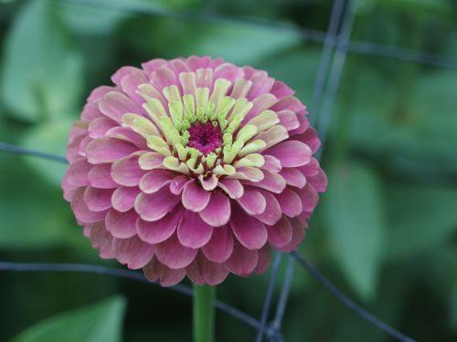 花ギフト|フラワーギフト|誕生日 花|カノシェ話題|スタンド花|ウエディングブーケ|花束|花屋|P8150194
