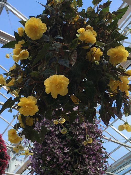 花ギフト|フラワーギフト|誕生日 花|カノシェ話題|スタンド花|ウエディングブーケ|花束|花屋|IMG_1861