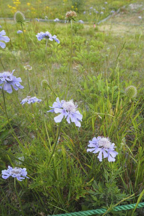 花ギフト|フラワーギフト|誕生日 花|カノシェ話題|スタンド花|ウエディングブーケ|花束|花屋|P8120027