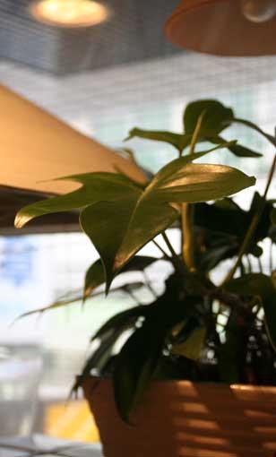 花ギフト|フラワーギフト|誕生日 花|カノシェ話題|スタンド花|ウエディングブーケ|花束|花屋|グリーン