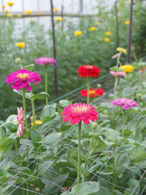 花ギフト|フラワーギフト|誕生日 花|カノシェ話題|スタンド花|ウエディングブーケ|花束|花屋|P8150180