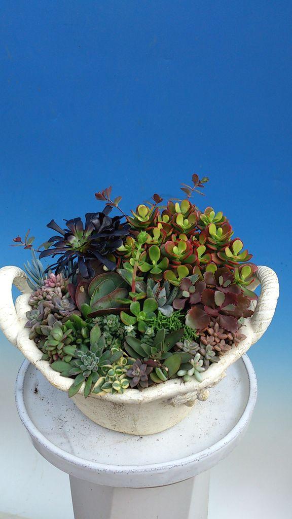 花ギフト|フラワーギフト|誕生日 花|カノシェ話題|スタンド花|ウエディングブーケ|花束|花屋|DSC_1093