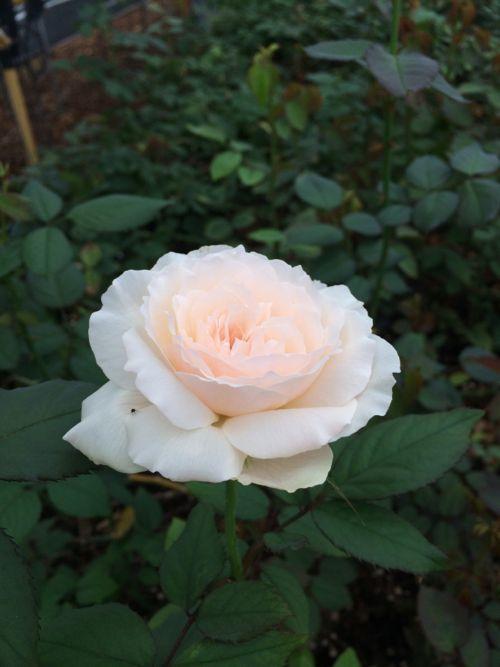花ギフト|フラワーギフト|誕生日 花|カノシェ話題|スタンド花|ウエディングブーケ|花束|花屋|IMG_6907