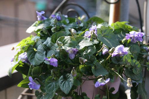 花ギフト|フラワーギフト|誕生日 花|カノシェ話題|スタンド花|ウエディングブーケ|花束|花屋|においすみれ2