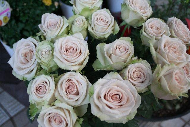 花ギフト|フラワーギフト|誕生日 花|カノシェ話題|スタンド花|ウエディングブーケ|花束|花屋|IMG_0213
