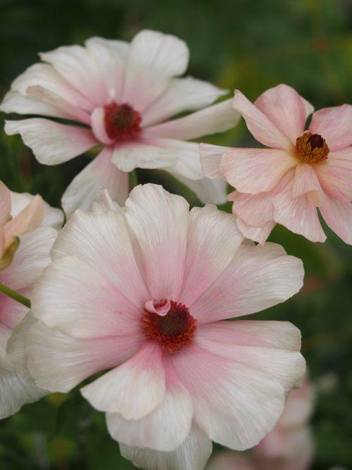 花ギフト|フラワーギフト|誕生日 花|カノシェ話題|スタンド花|ウエディングブーケ|花束|花屋|P1010145
