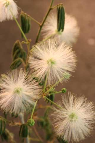 花ギフト|フラワーギフト|誕生日 花|カノシェ話題|スタンド花|ウエディングブーケ|花束|花屋|白ネム