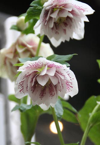 花ギフト|フラワーギフト|誕生日 花|カノシェ話題|スタンド花|ウエディングブーケ|花束|花屋|IMG_6376