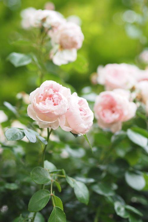 花ギフト|フラワーギフト|誕生日 花|カノシェ話題|スタンド花|ウエディングブーケ|花束|花屋|P6022680