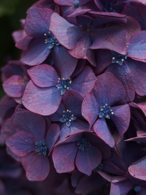 花ギフト|フラワーギフト|誕生日 花|カノシェ話題|スタンド花|ウエディングブーケ|花束|花屋|P6280440