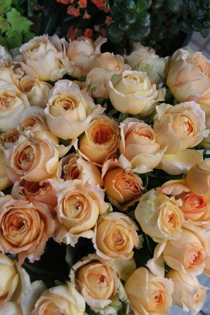 花ギフト|フラワーギフト|誕生日 花|カノシェ話題|スタンド花|ウエディングブーケ|花束|花屋|IMG_0216