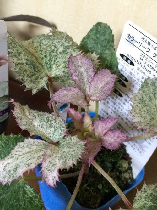 花ギフト|フラワーギフト|誕生日 花|カノシェ話題|スタンド花|ウエディングブーケ|花束|花屋|IMG_9559
