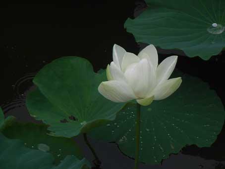 花ギフト|フラワーギフト|誕生日 花|カノシェ話題|スタンド花|ウエディングブーケ|花束|花屋|hasu3