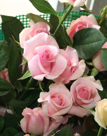 花ギフト|フラワーギフト|誕生日 花|カノシェ話題|スタンド花|ウエディングブーケ|花束|花屋|タイタニック