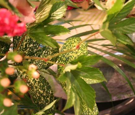 花ギフト|フラワーギフト|誕生日 花|カノシェ話題|スタンド花|ウエディングブーケ|花束|花屋|葉っぱ
