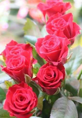 花ギフト|フラワーギフト|誕生日 花|カノシェ話題|スタンド花|ウエディングブーケ|花束|花屋|チェリー2