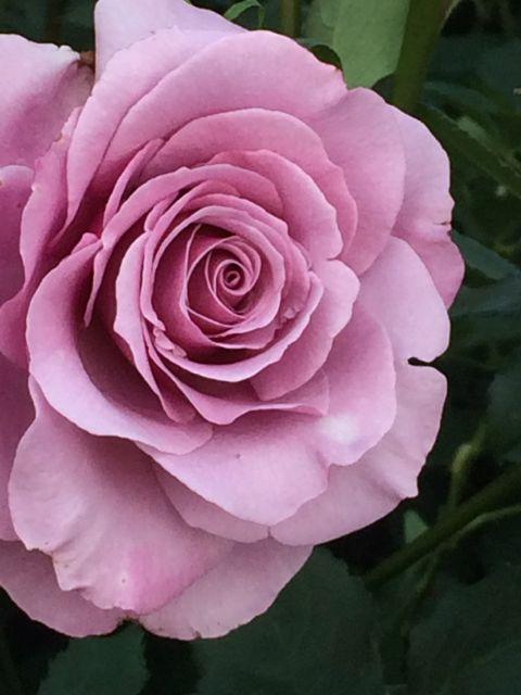 花ギフト|フラワーギフト|誕生日 花|カノシェ話題|スタンド花|ウエディングブーケ|花束|花屋|IMG_1497