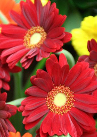 花ギフト フラワーギフト 誕生日 花 カノシェ話題 スタンド花 ウエディングブーケ 花束 花屋 IMG_0146
