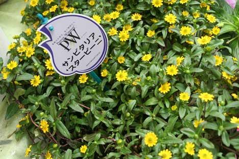 花ギフト|フラワーギフト|誕生日 花|カノシェ話題|スタンド花|ウエディングブーケ|花束|花屋|サンビーニー
