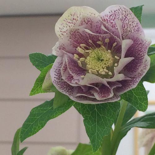 花ギフト|フラワーギフト|誕生日 花|カノシェ話題|スタンド花|ウエディングブーケ|花束|花屋|IMG_9542