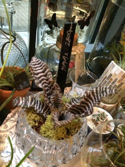 花ギフト|フラワーギフト|誕生日 花|カノシェ話題|スタンド花|ウエディングブーケ|花束|花屋|IMG_7447