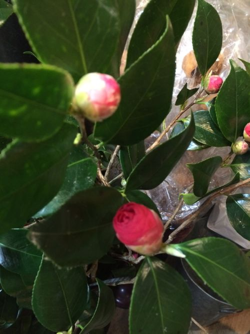 花ギフト|フラワーギフト|誕生日 花|カノシェ話題|スタンド花|ウエディングブーケ|花束|花屋|IMG_9173