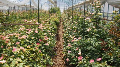 花ギフト|フラワーギフト|誕生日 花|カノシェ話題|スタンド花|ウエディングブーケ|花束|花屋|P1011142