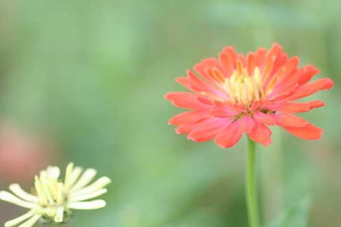 花ギフト|フラワーギフト|誕生日 花|カノシェ話題|スタンド花|ウエディングブーケ|花束|花屋|ジニアオレンジ