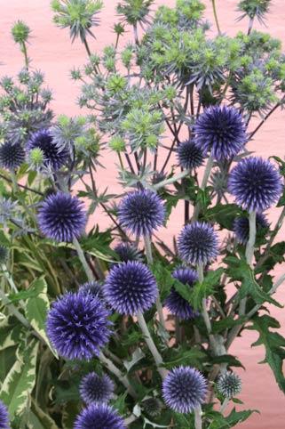 花ギフト|フラワーギフト|誕生日 花|カノシェ話題|スタンド花|ウエディングブーケ|花束|花屋|ruri