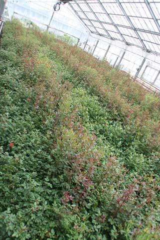花ギフト|フラワーギフト|誕生日 花|カノシェ話題|スタンド花|ウエディングブーケ|花束|花屋|リトル畑