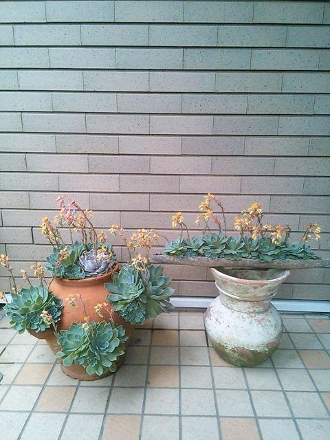 花ギフト|フラワーギフト|誕生日 花|カノシェ話題|スタンド花|ウエディングブーケ|花束|花屋|NCM_0663